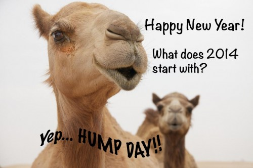 Hump Day, Camel, Happy New Year